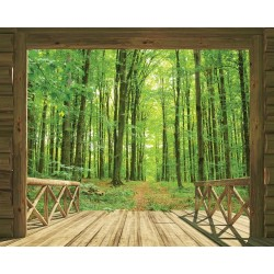Foto Tapetai Woodland Forest